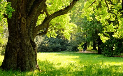 Honouring your life by committing it to paper IMAGE