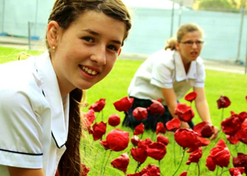 1000 poppies for friend and fallen soldiers  IMAGE