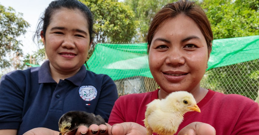 Caritas transforming farming in Cambodia IMAGE
