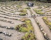 Labyrinths are not mazes but they are amazing