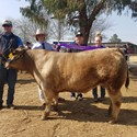 Success for St Joseph's Aberdeen at Glen Innes Show Image